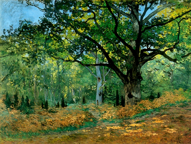 Monet-le chêne Bodmer.jpg