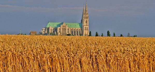Chartres profil sur blés